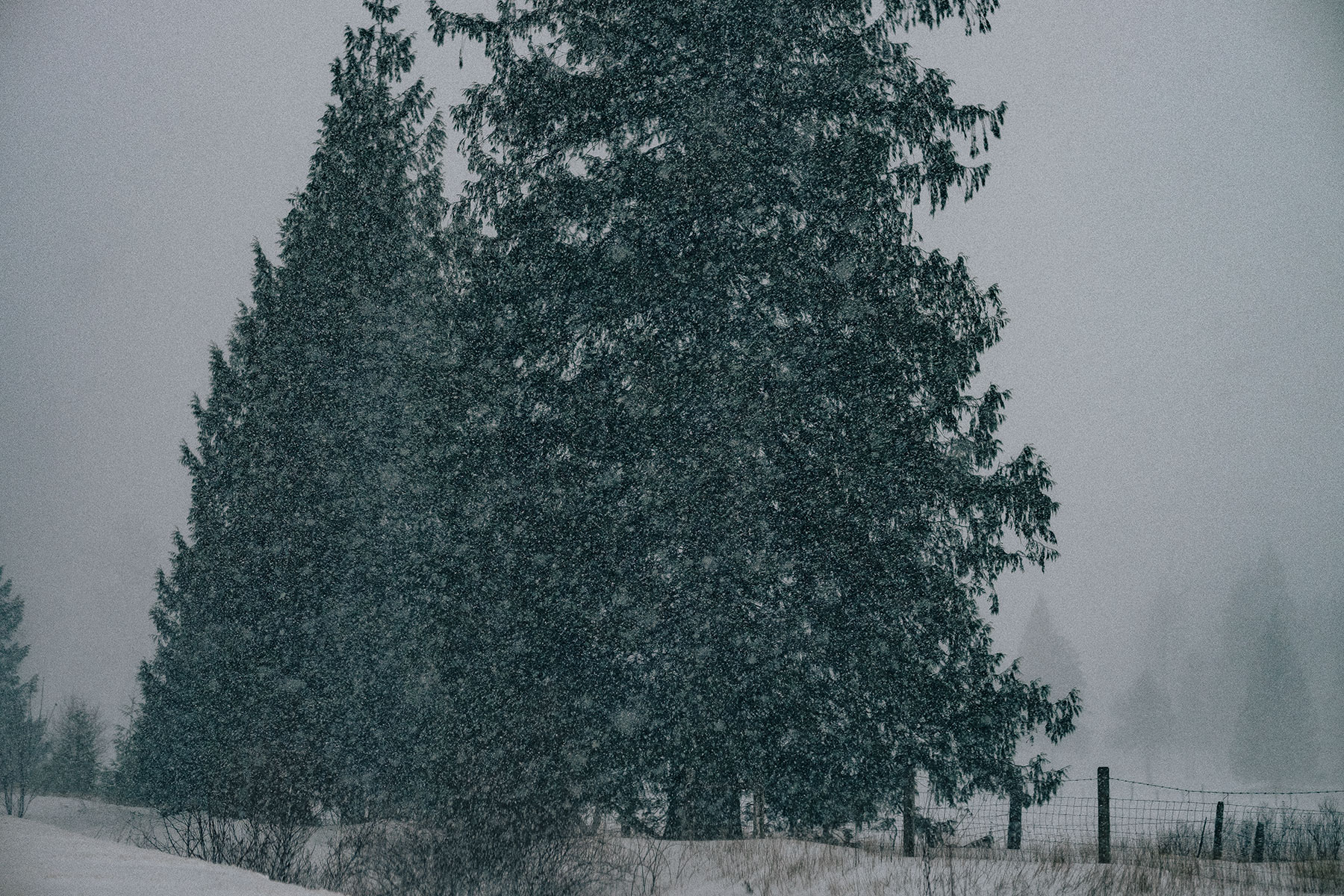Snow Fall, Clearwater BC